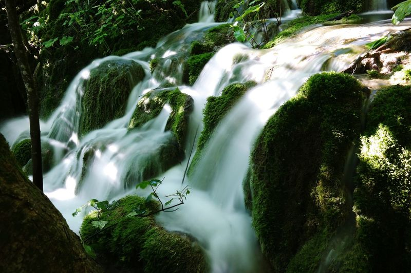 Plitvice Lakes National Park Tree Water Waterfall Forest Motion Long Exposure River Moss