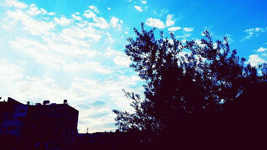 Cloud - Sky Sky Nature Tree My Favorite Color Blue Jordan First Eyeem Photo Traveling Beauty In Nature Shine City Tumblr