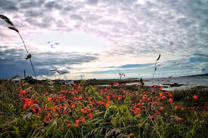 The Wild Atlantic Way, Ireland. Tadaa Community EyeEm Nature Lover
