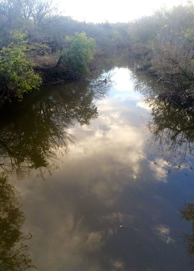 Tree Nature Reflection Sky Beauty In Nature Tranquility No People Outdoors Day Water