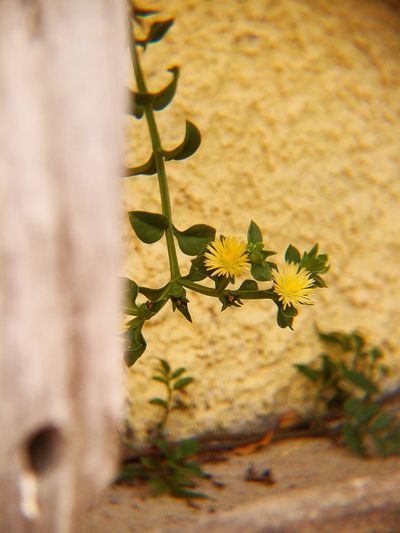 Details Small Is Beauty Flowers Nature_collection