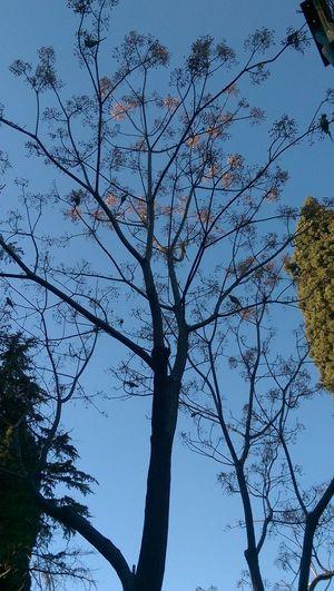 Winter Tree Parrots