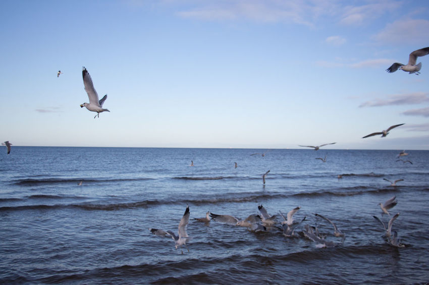 Morning Beach Seagulls And Sea Seagulls In Flight Seagull And Sky Seagulls Flying Nature Wave Baltic Sea Winter Baltic Sea Baltic Coast Scenics Flying Bird Leisure Activity Christmas Around The World Christmas Sea Sand Water EyeEm Best Shots Been There.
