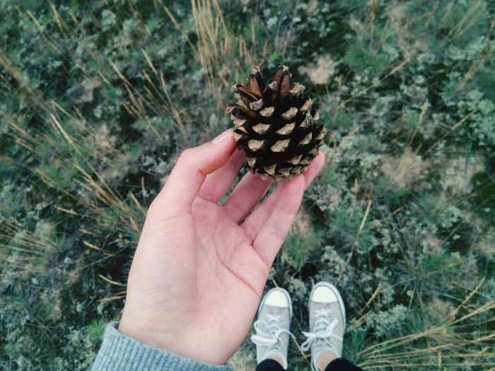 Forest Forestwalk Cone Connected With Nature Under Foot Hello World Enjoying Life Field Walk Summer Summertime Countryside Country Nature_collection Green Green Color Greenery Connect With Nature Soil Summer ☀ Russia Campaign CampaignSeason Nature