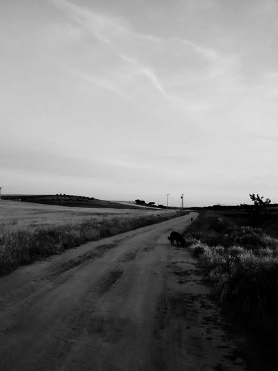 Blackandwhite Blancoynegro Light And Shadow Monochrome OpenEdit Depth Of Field Nowhere Roadtonowhere Field Fieldscape