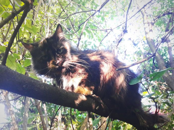 One Animal Tree Pets Cat Animal Looking Day Zoology One Animal Animal Themes Tree Mammal Branch Domestic Animals Low Angle View Pets Domestic Cat Cat Animal Head  Zoology Alertness Feline Day Outdoors Photo