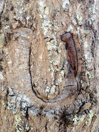 Ancient Close-up Day Goodluckcharm Horse Shoe Nature No People Outdoors Textured