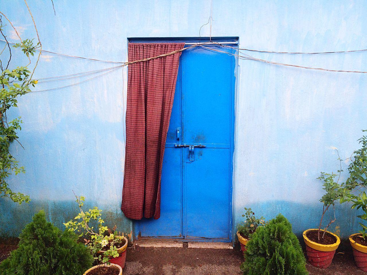 BLUE DOOR OF PLANTS AGAINST SKY