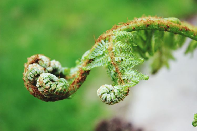 Close-up Green Color Growth Plant Selective Focus Stem Nature Focus On Foreground Branch Day Botany New Life Needle - Plant Part Spiked Thorn Green Fragility Beauty In Nature fern