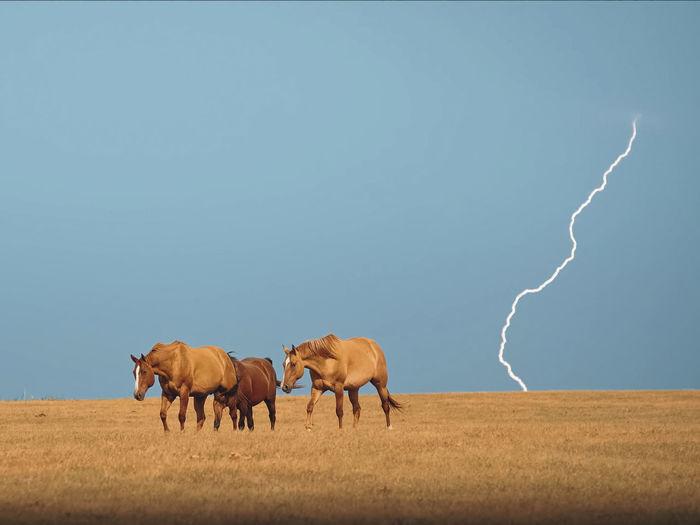 Horses on land against lightning