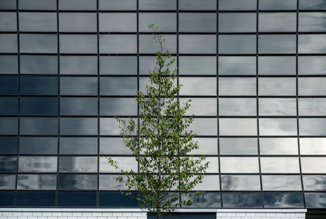 Low Angle View Of Tree Against Modern Building With Reflection Of Cloudy Sky