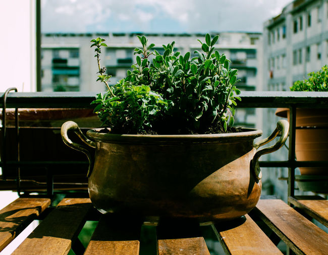 Close-up of potted plant on table in balcony