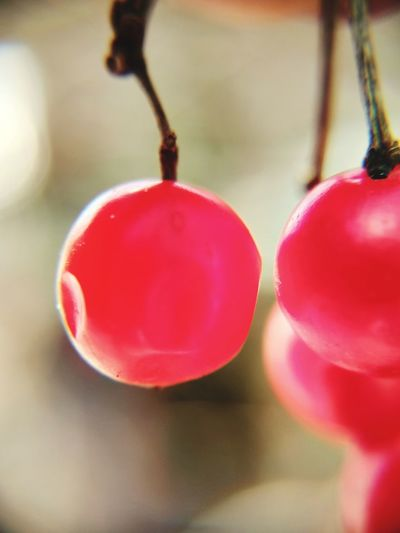 Close-up of red berries hanging on plant