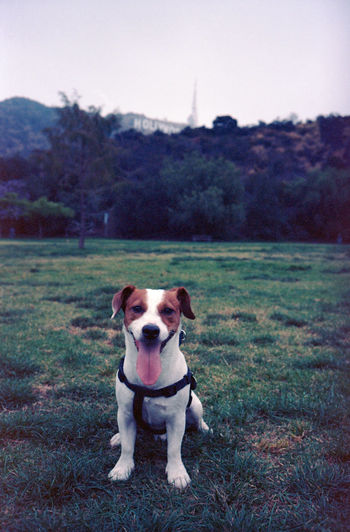 Animal Themes Brown Close-up Day Dog Dog Park Domestic Animals Field Freshness Full Length Grass Harness Hollywood Sign Jack Russell Terrier Mammal Nature No People One Animal Outdoors Park Pets Sitting Sky Tounge Tree EyeEmNewHere The Portraitist - 2017 EyeEm Awards Place Of Heart The Portraitist - 2017 EyeEm Awards