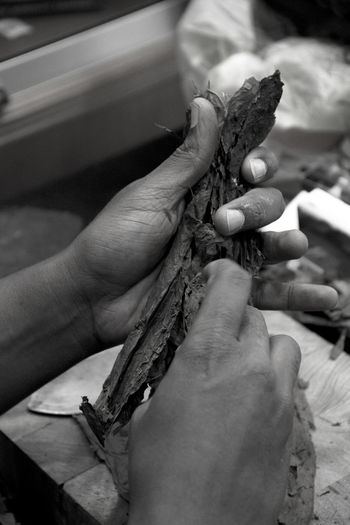 Human Hand Human Body Part Indoors  Close-up Day Cigarette Butts Cigar Smoking Cigar Cigar Making Cigar Manufactury Cigar Maker Cigar Manufactory Cuban Cuban Life Cuban Style Cuban Cigar Cuban Cigars  Cubancigar Havano ,