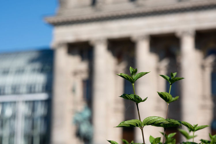 Architectural Column Architecture Building Building Exterior Built Structure City Close-up Day Focus On Foreground Green Color Growth History Leaf Low Angle View Nature No People Outdoors Plant Plant Part Travel Destinations