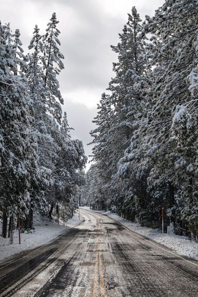 One from the 1.5 days of winter. The Way Forward Road Tree Transportation Diminishing Perspective Nature Sky Cold Temperature Outdoors Winter Snow Beauty In Nature Day Tranquility Tranquil Scene Scenics California Dreamin