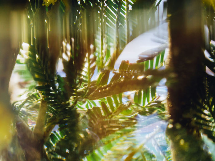 Plant Tree Nature Water Selective Focus Beauty In Nature Growth Underwater Close-up Day No People Sea Animal Wildlife Animal Palm Tree Leaf Animals In The Wild Outdoors Tropical Climate UnderSea Marine Palm Leaf