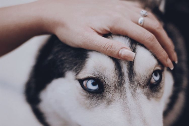 Look into my eyes Pets Husky Dog Human Body Part Human Hand Body Part Close-up Hand Indoors  Adult Beauty Portrait Headshot Eye Finger