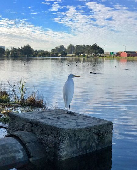 Bird One Animal Water Animal Themes Animals In The Wild Animal Wildlife Lake Nature Sky Day Outdoors No People Perching L. Jeffrey Moore IPhone 7 Plus Non-urban Scene Landscape Beauty In Nature Water_collection Adapted To The City