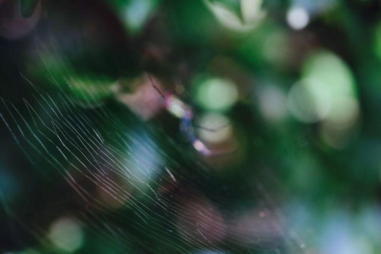 罠* こんなキラキラな罠ならかかってみたい(//∇//) 玉ボケ Park Eye Em Nature Lover Nature Autumn Japan キラキラ Green 光と陰 EyeEm Best Shots