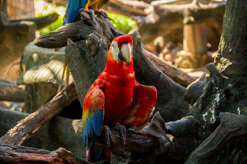 Animal Themes Animals In The Wild Bangkok Green Color Macaw Bird Safari World Thailand Animal Themes Animal Wildlife Animals In The Wild Bird Birds Blue Colorful Bird Colorful Nature Day Macaw Macaw Parrot Multi Colored Nature No People No People, Outdoors Parrot Sky