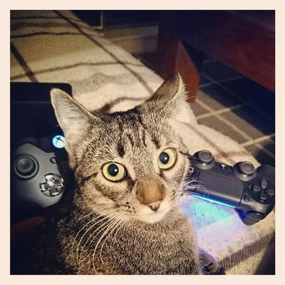 Gaming!!! Igersitzi Igerscats Igersanimals Igersgames igersvideogames serapesado nextgen XperiaZ1