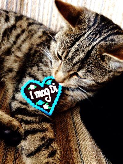 😍 Loves Me First Eyeem Photo Kitten Bayern Bavaria Heartbeat Moments Hearts Lovely Oktoberfest I Mog Di Love
