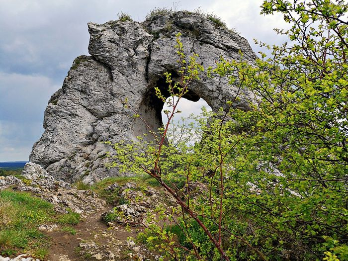 Low angle view of rock formation on tree against sky