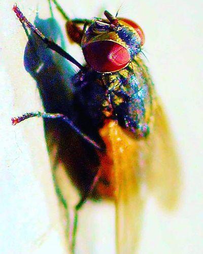 "There was a Fly on the floor I quickly grabbed my nikon, and said ""YO""! =) 2) Electric_macro 3) 9vaga_macro9 4) Bugs_are_us_ 5) Exclusive_bugs 6) Macro_perfection 7) Macroworld_ 8) Insectagram 9) Pocket_macro 0) Tgif_insects 1) Rsa_macro 2) Ptk_macro 3) Loves_united_macro 4) Macro_spotlight 5) Fotofanatics_macro_ 6) Amateurs_shot 7) Resourcemag 8) Macro_club 9) Macroworld_tr 0) Ig_shotz 1) Best_macro 2) Fstoppers 3) Macroclique 4) Macro_holic 5) Macro_captures 6) fstoppers 7) fotocathers 8) macroclique 9) show_us_macro 0) my_daily_macro"