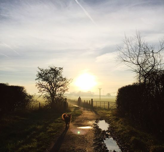 High angle view of dog on footpath during sunrise