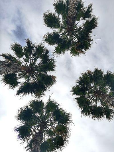Quarter palm