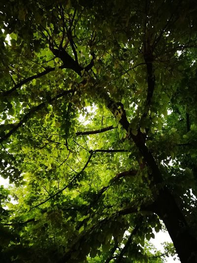Tree Growth Nature Green Color Outdoors Forest No People Beauty In Nature Freshness BYOPaper!