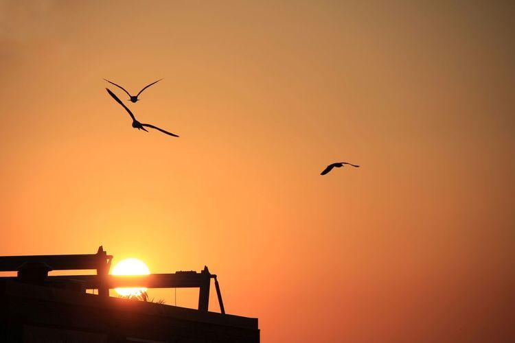 EyeEm Selects Sunset Sky Silhouette Bird Animal Animal Themes