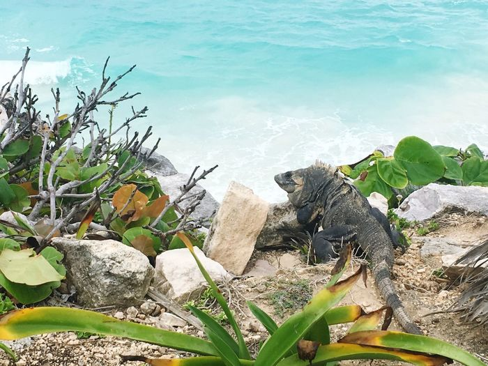 Nature Summergefühle Animals In The Wild Iguana Beauty In Nature Reptile Water Sommergefühle