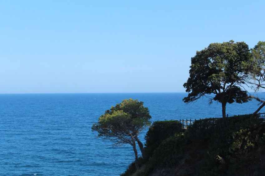 Sea Water Horizon Over Water Nature Clear Sky Tree Tranquil Scene Tranquility Beauty In Nature Blue Scenics No People Day Outdoors Plant Growth Sky Gironamenamora Costa Brava Lloret De Mar 100 Days Of Summer