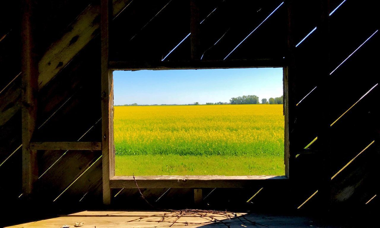 SCENIC VIEW OF FIELD AGAINST SKY SEEN FROM YELLOW