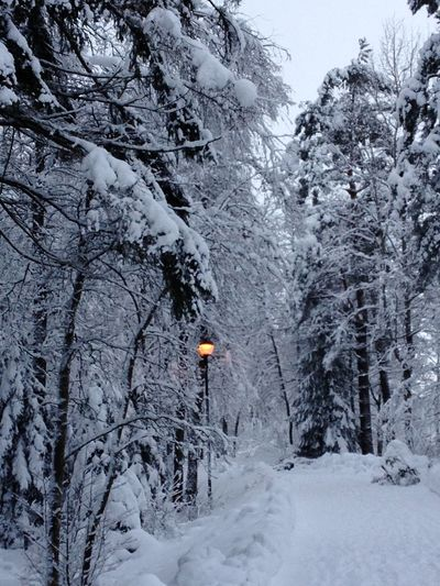 Winter Snow Winter Tree Cold Temperature Plant Beauty In Nature Land Forest Nature White Color Non-urban Scene Frozen Day Tranquil Scene No People Tranquility