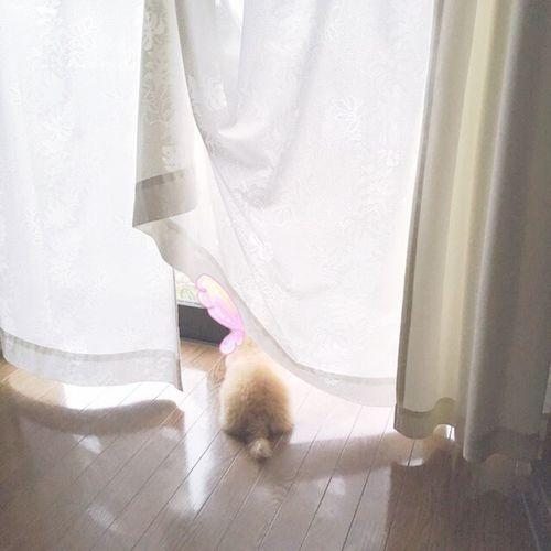 Dog Japan Love 犬