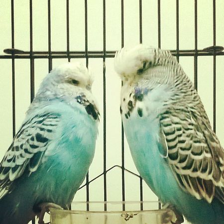 Captured in a expo at valluvar kottam @natrajsubramanian Lovebirds Chennai Ps25under25