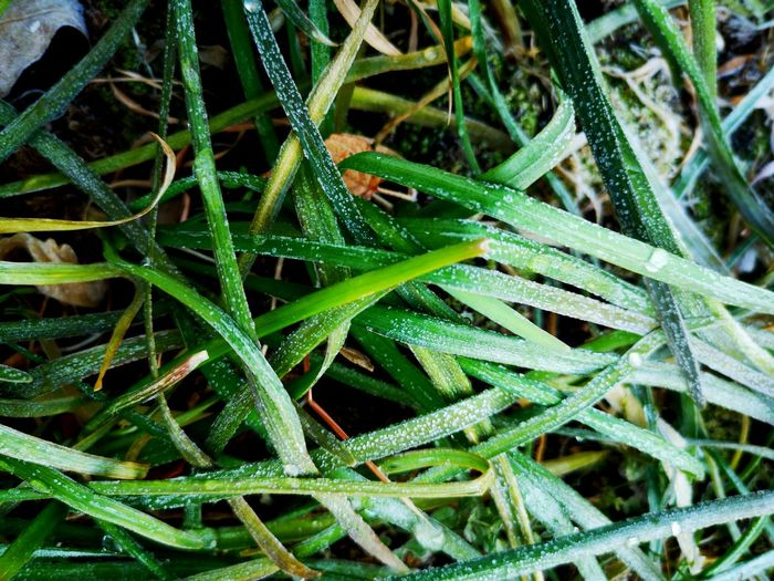 Close-up of wet plants on field