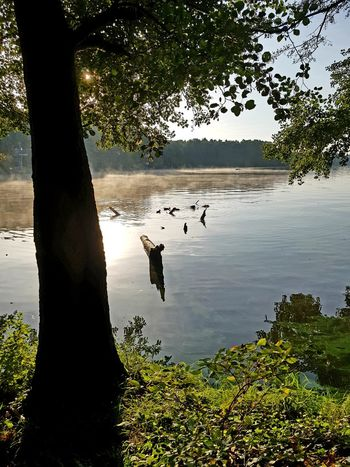 Beauty In Nature Nature Nature Photography Nature_collection Enten Morning Light Morning Morgenstimmung See Seelandschaft Seascape Sealife Sea Naturephotography Bird Tree Water Swimming Lake Reptile Silhouette Reflection Sky