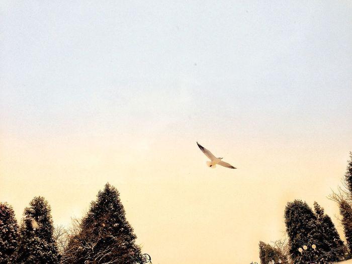 Bird Tree Spread Wings Flying Mid-air Silhouette Sky