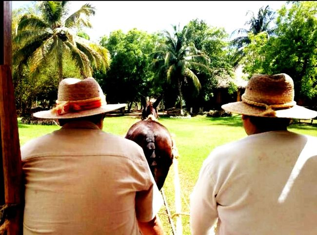 Rear View Real People Outdoors Only Men Animals In The Wild Haciendasmexicanas Yucatan Mexico DonkeyCart