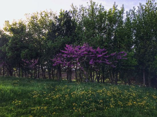 Flower Growth Tree Purple Nature Beauty In Nature Blossom No People Outdoors Fragility Freshness Day