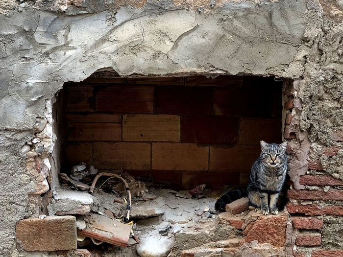 Cat on wall of old building