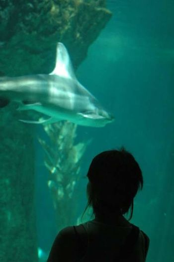 UnderSea Sea Life Swimming Aquarium Underwater Water Headshot Rear View Shark Fish