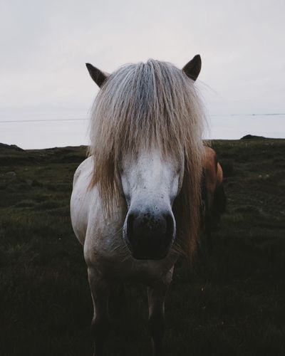 Close-up of icelandic horse standing on field against sky