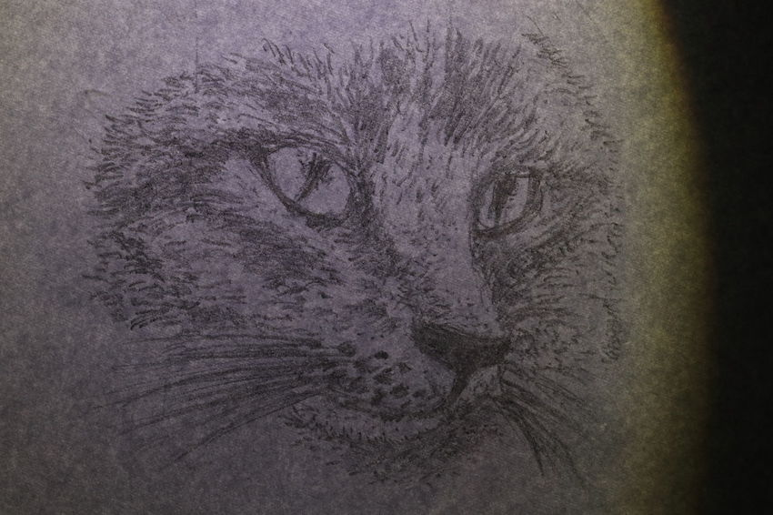 The face of cat wrote by pencil on white paper Diamond Eyes  Textures Animal Animal Head  Animal Themes Animals In The Wild Black And White Cat Close-up Cute Drawing Fur Ideas Lazy Animal Long Mustache Long Tail Mammal Nature Night No People One Animal Outdoors Paper Portrait Texture