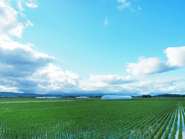Scenery of beautiful rural paddy fields (綺麗な田舎の水田の風景) Ad Agriculture Beautiful Blue Color Copy Space Daytime Green Nature Quiet The Countryside Black Color Blue Sky Brown Countryside Landscape Margin No Person Nobody Paddy Field Silence Sky Text Space White 水田 田舎道